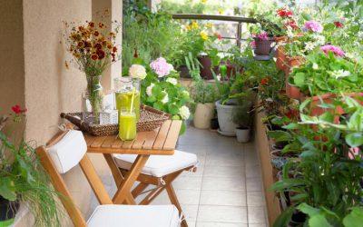 Terrace Roof Garden